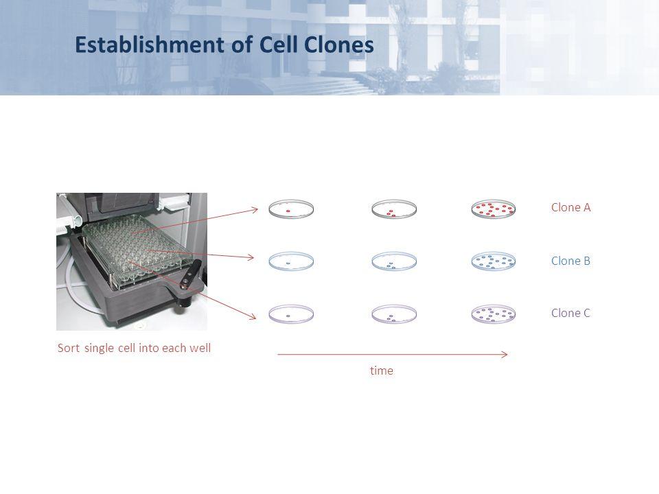 Establishment of Cell Clones