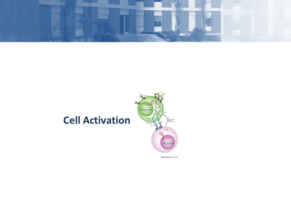 Cell Activation