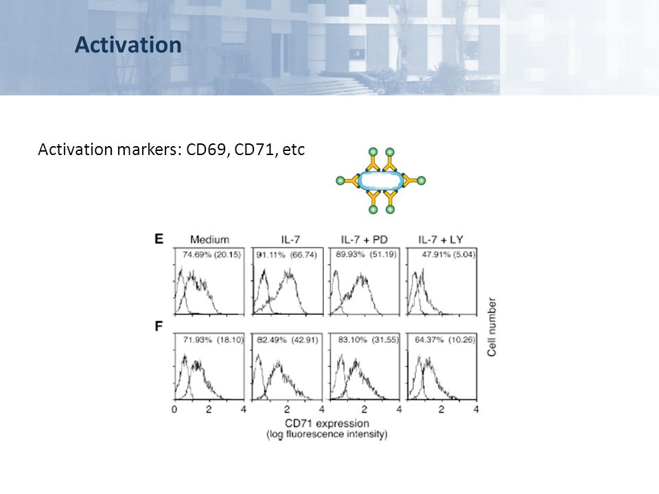 Activation Activation markers: CD69, CD71, etc