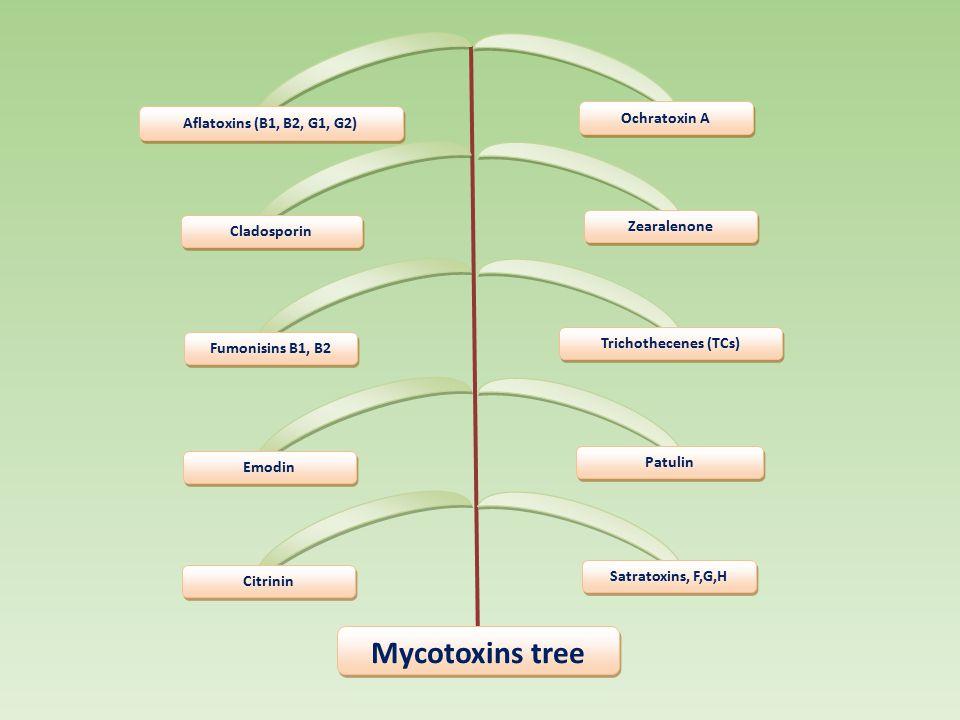 Mycotoxins tree Ochratoxin A Aflatoxins (B1, B2, G1, G2) Zearalenone