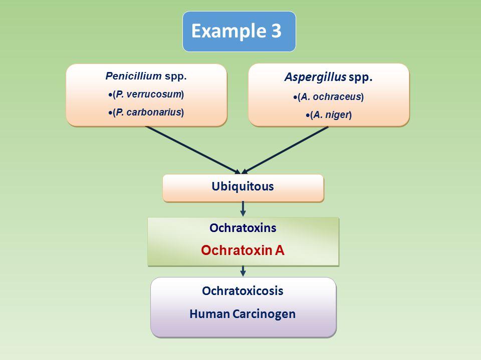 Example 3 Aspergillus spp. Ubiquitous Ochratoxins Ochratoxin A