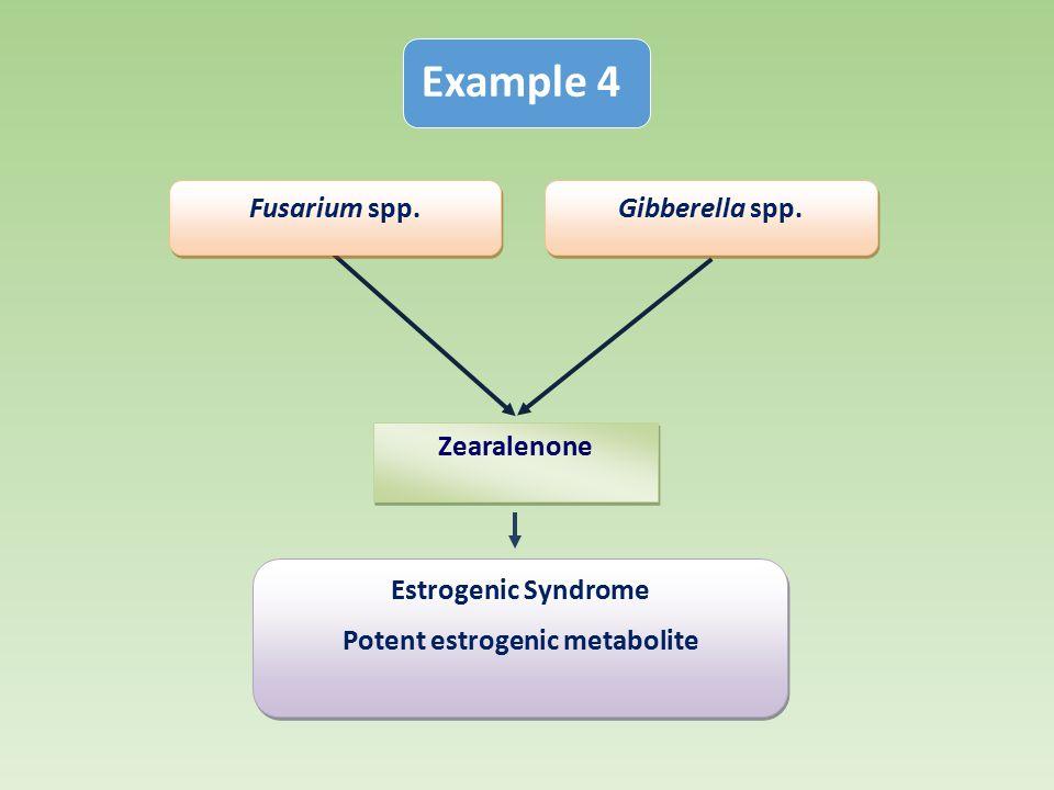 Potent estrogenic metabolite