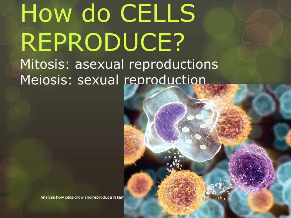 How do CELLS REPRODUCE Mitosis: asexual reproductions Meiosis: sexual reproduction