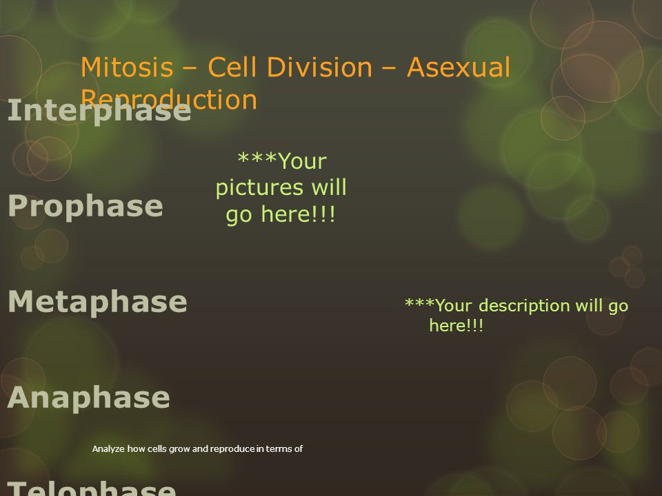 Mitosis – Cell Division – Asexual Reproduction