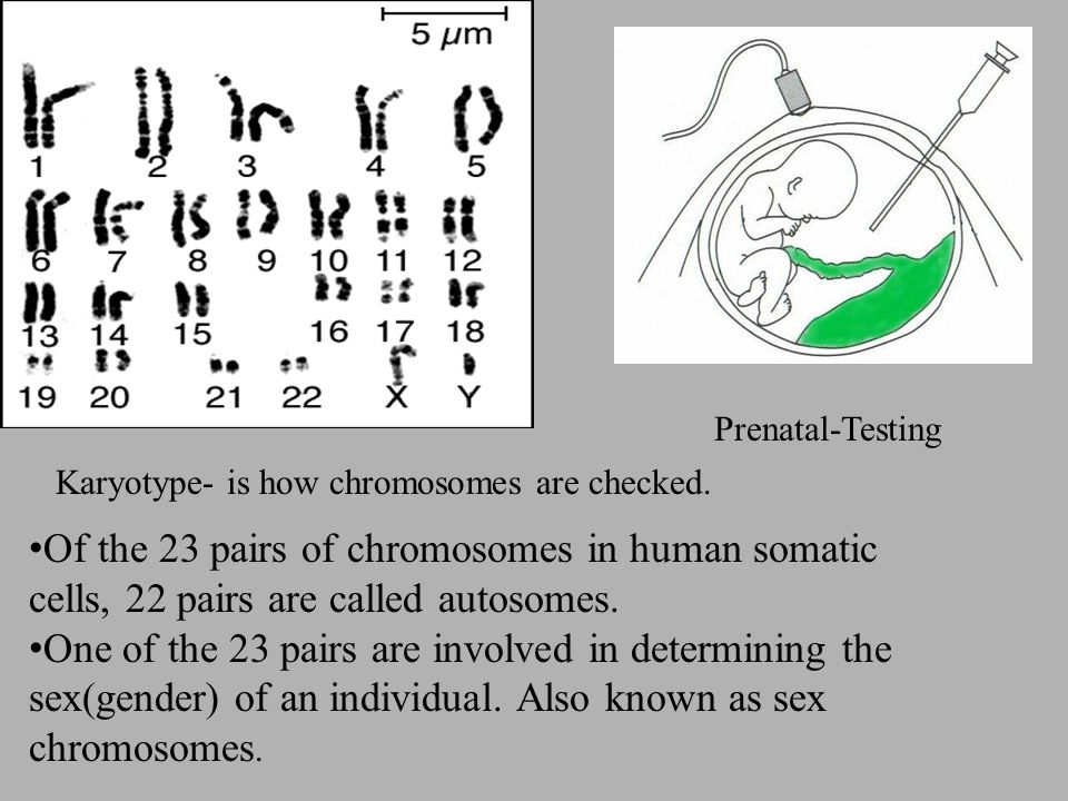 Prenatal-Testing Karyotype- is how chromosomes are checked. Of the 23 pairs of chromosomes in human somatic cells, 22 pairs are called autosomes.