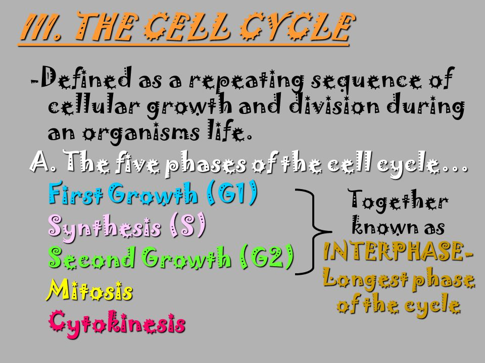 Together known as INTERPHASE-Longest phase of the cycle