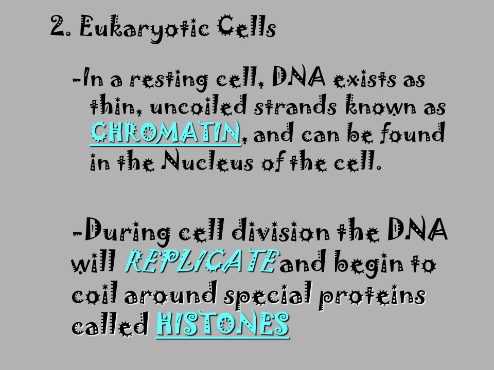2. Eukaryotic Cells -In a resting cell, DNA exists as thin, uncoiled strands known as CHROMATIN, and can be found in the Nucleus of the cell.