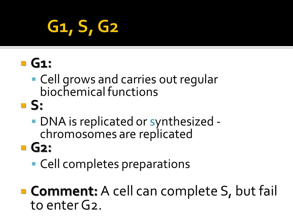 G1, S, G2 G1: Cell grows and carries out regular biochemical functions. S: DNA is replicated or synthesized - chromosomes are replicated.