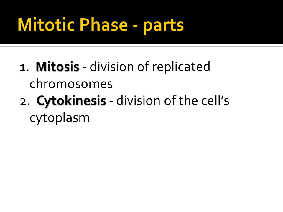 Mitotic Phase - parts 1. Mitosis - division of replicated chromosomes 2.