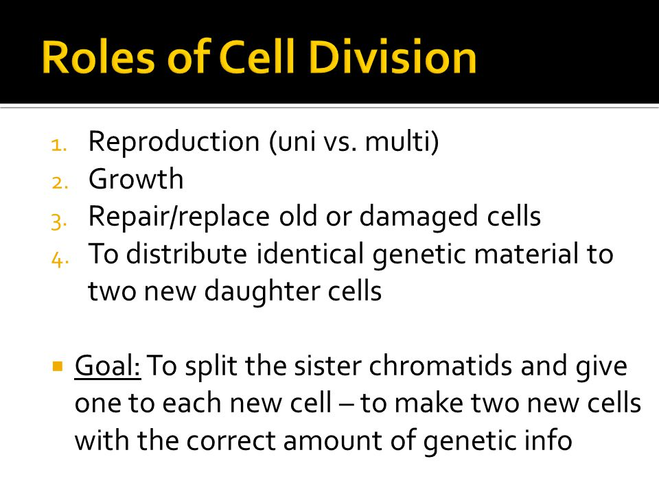 Roles of Cell Division Reproduction (uni vs. multi) Growth