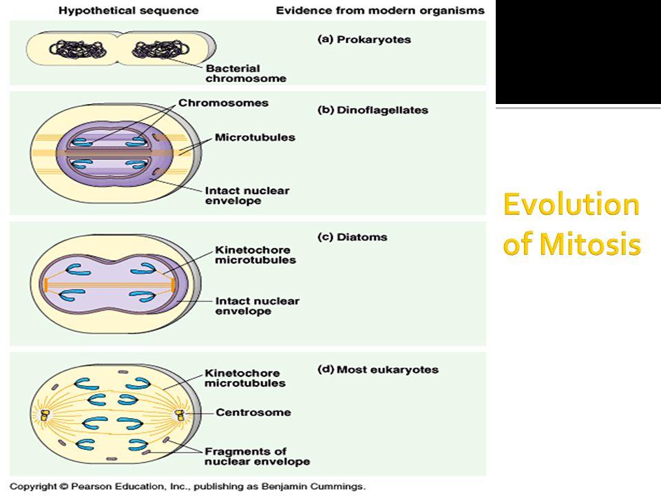 Evolution of Mitosis