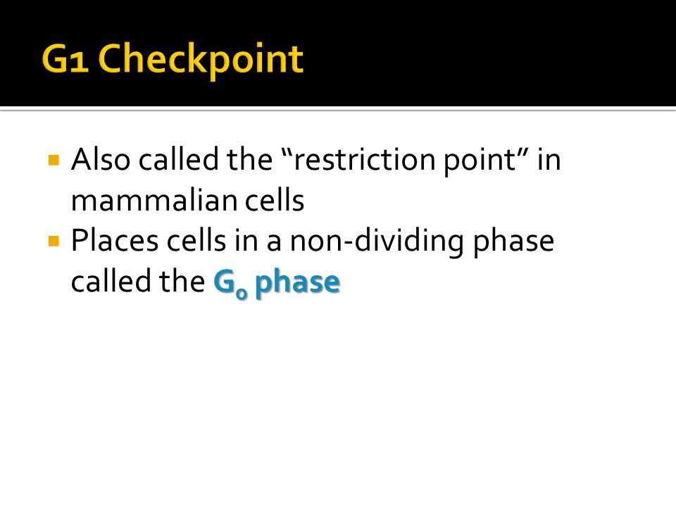 G1 Checkpoint Also called the restriction point in mammalian cells
