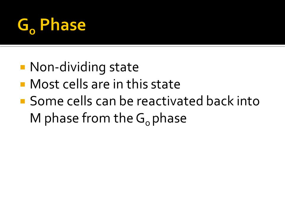Go Phase Non-dividing state Most cells are in this state