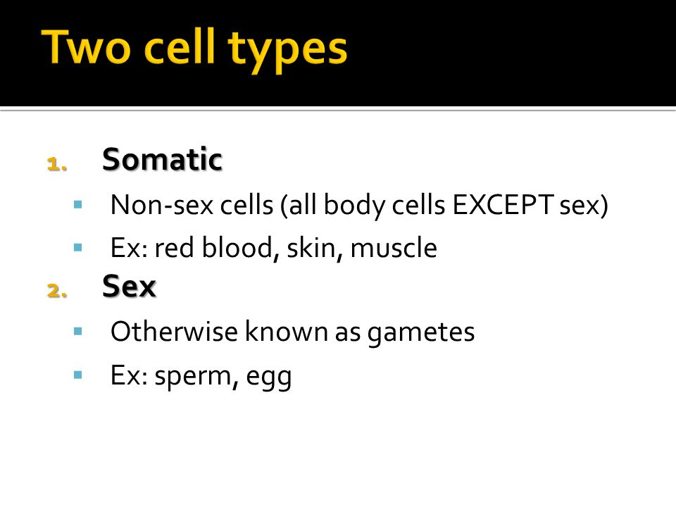 Two cell types Somatic Sex Non-sex cells (all body cells EXCEPT sex)
