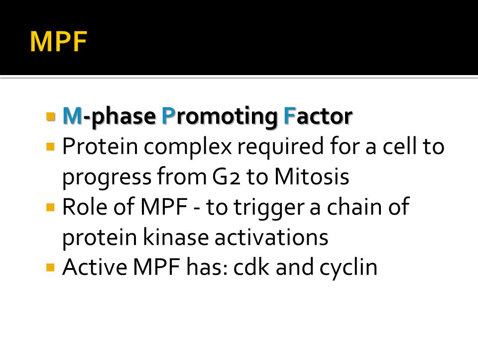 MPF M-phase Promoting Factor