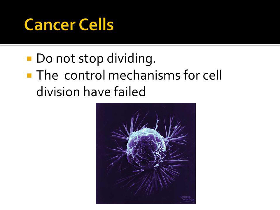 Cancer Cells Do not stop dividing.