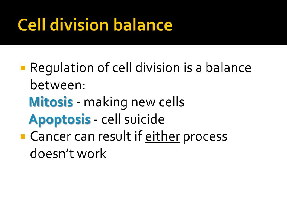 Cell division balance Regulation of cell division is a balance between: Mitosis - making new cells.