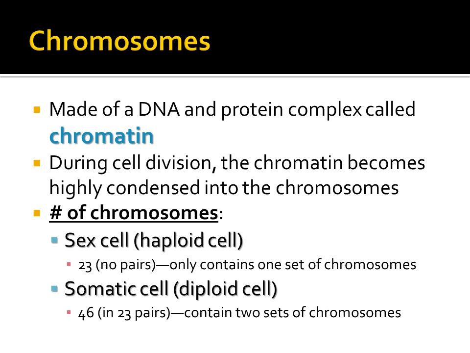 Chromosomes Made of a DNA and protein complex called chromatin