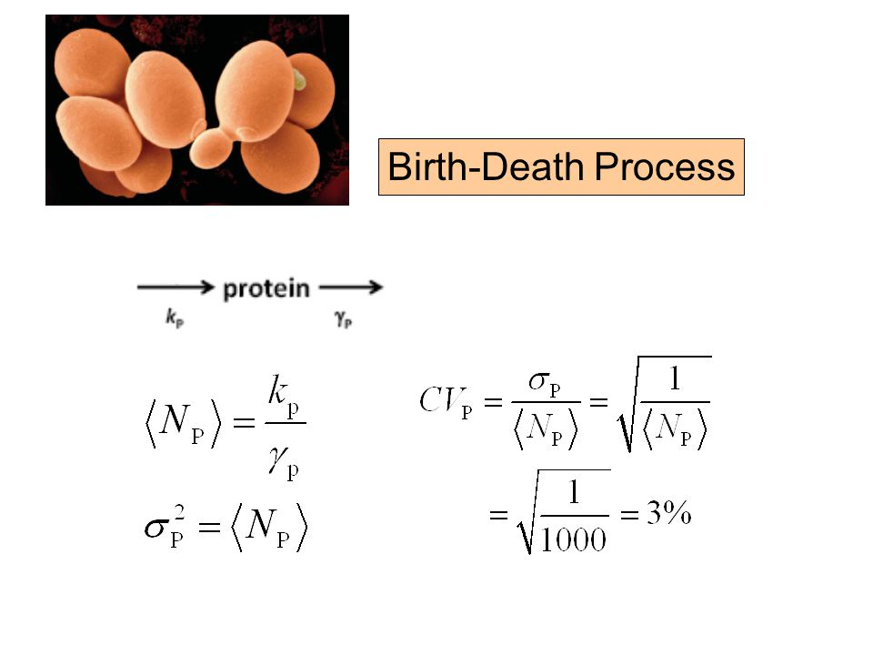 Birth-Death Process