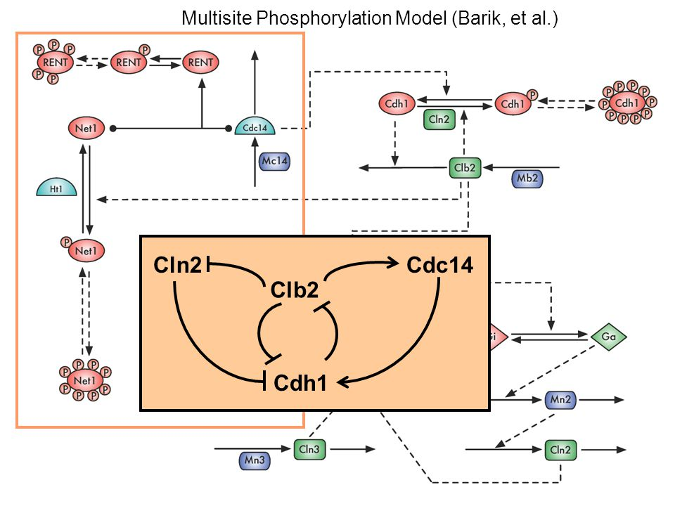 Multisite Phosphorylation Model (Barik, et al.)