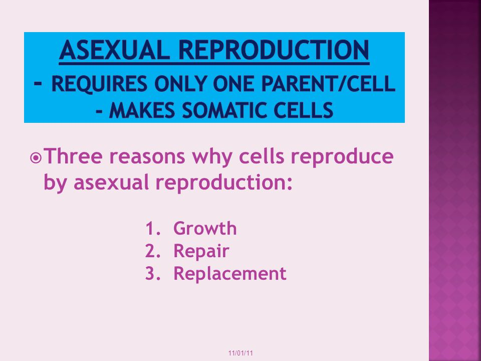 Asexual reproduction - Requires only ONE parent/cell - Makes Somatic cells