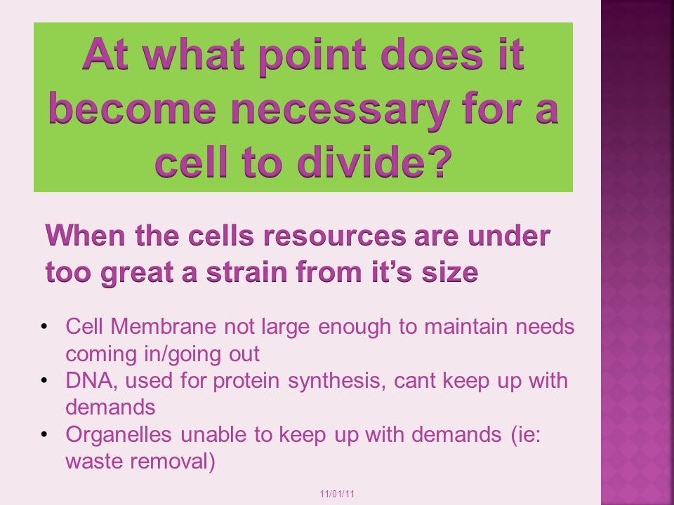 At what point does it become necessary for a cell to divide