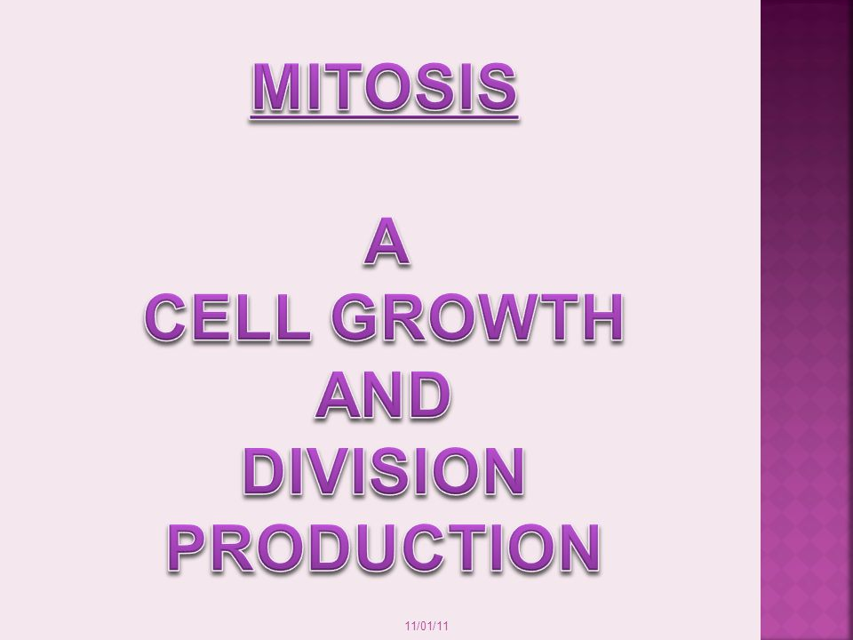 MITOSIS A CELL GROWTH AND DIVISION PRODUCTION