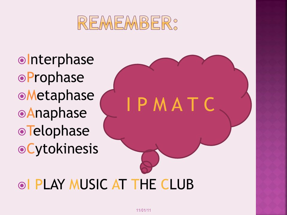 REMEMBER: I P M A T C Interphase Prophase Metaphase Anaphase Telophase