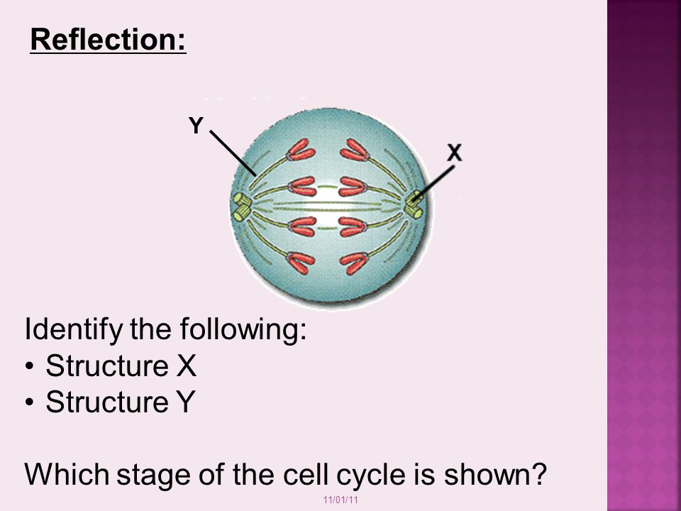 Identify the following: Structure X Structure Y