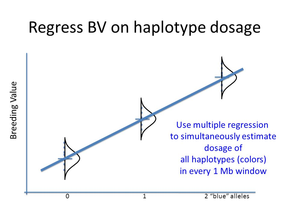 Regress BV on haplotype dosage