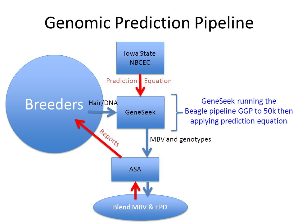 Genomic Prediction Pipeline