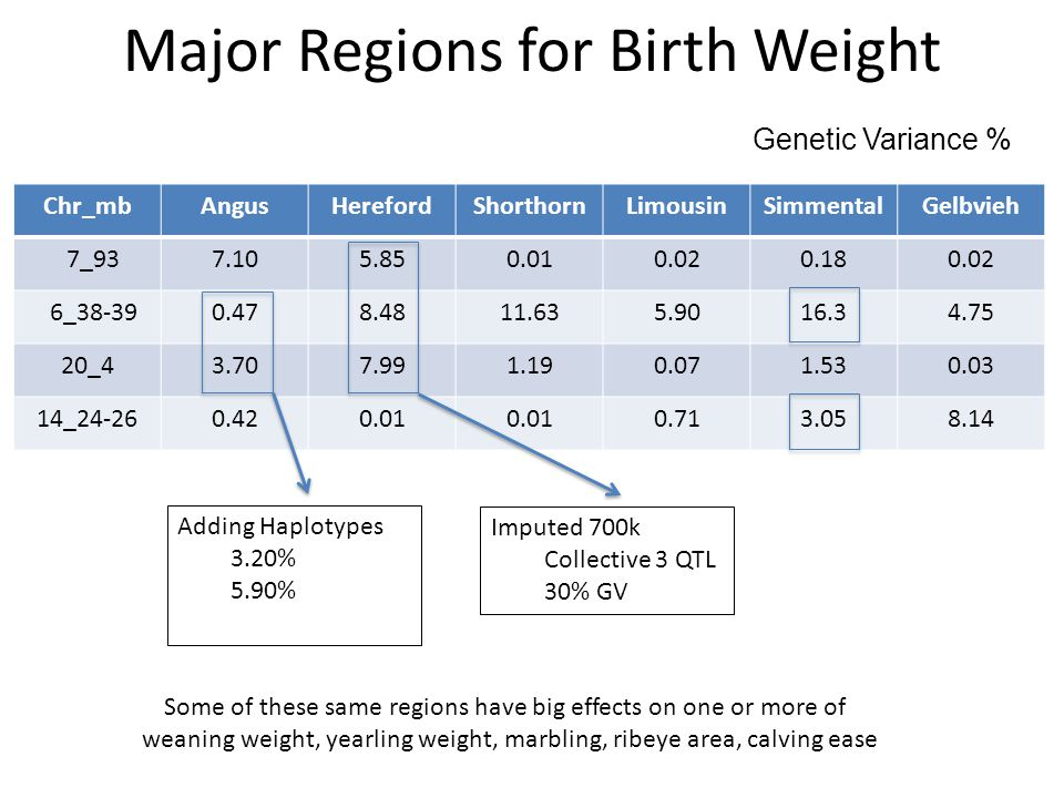 Major Regions for Birth Weight