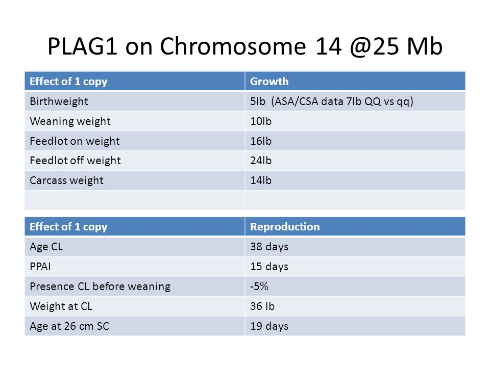 PLAG1 on Chromosome 14 @25 Mb Effect of 1 copy Growth Birthweight