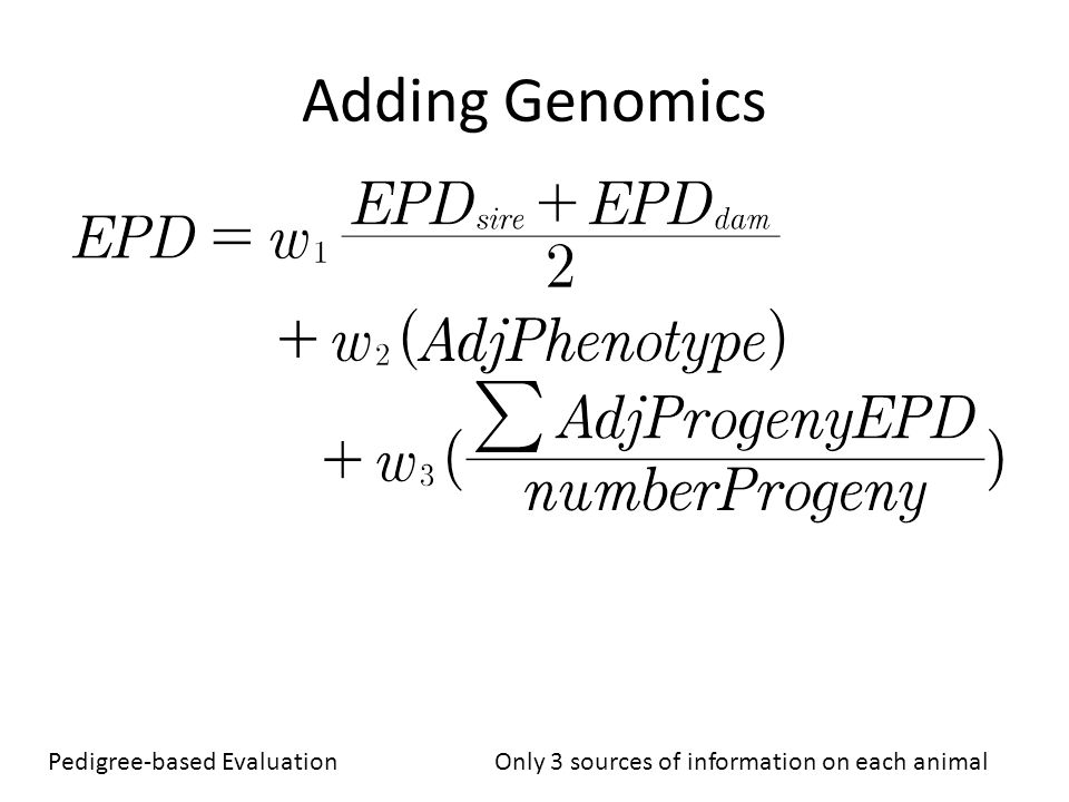 Adding Genomics Pedigree-based Evaluation Only 3 sources of information on each animal.