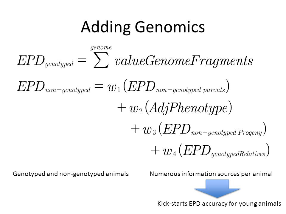 Adding Genomics Genotyped and non-genotyped animals Numerous information sources per animal.