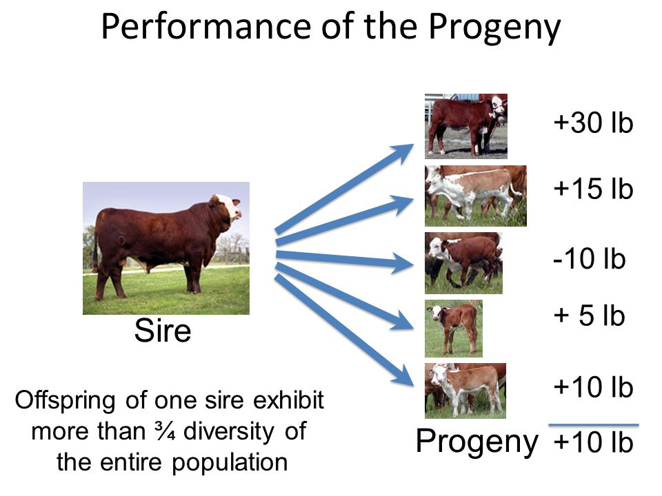 Performance of the Progeny
