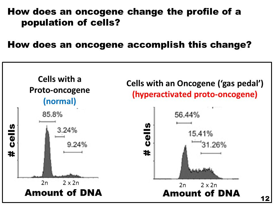 Cells with an Oncogene ('gas pedal') (hyperactivated proto-oncogene)