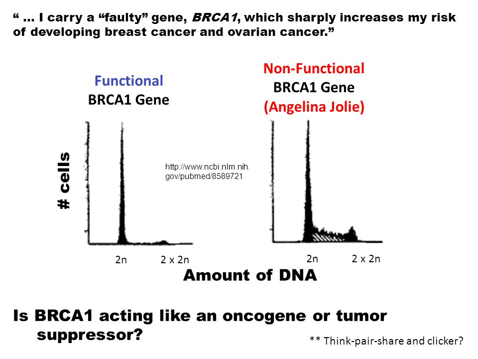 Non-Functional BRCA1 Gene (Angelina Jolie) Functional BRCA1 Gene
