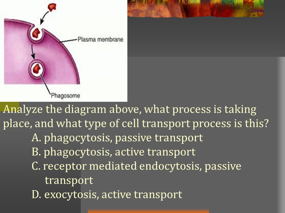 Analyze the diagram above, what process is taking place, and what type of cell transport process is this