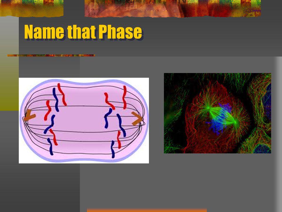 Name that Phase