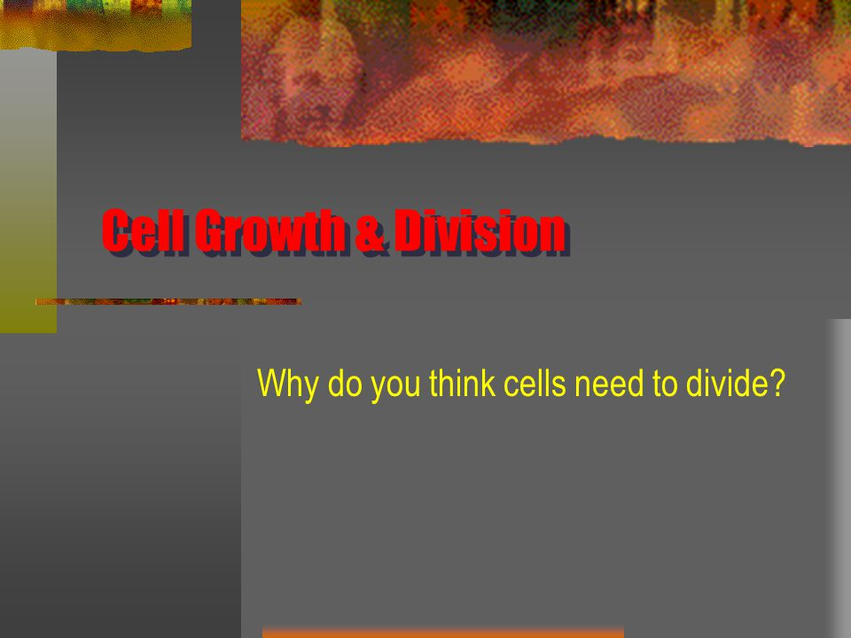Why do you think cells need to divide