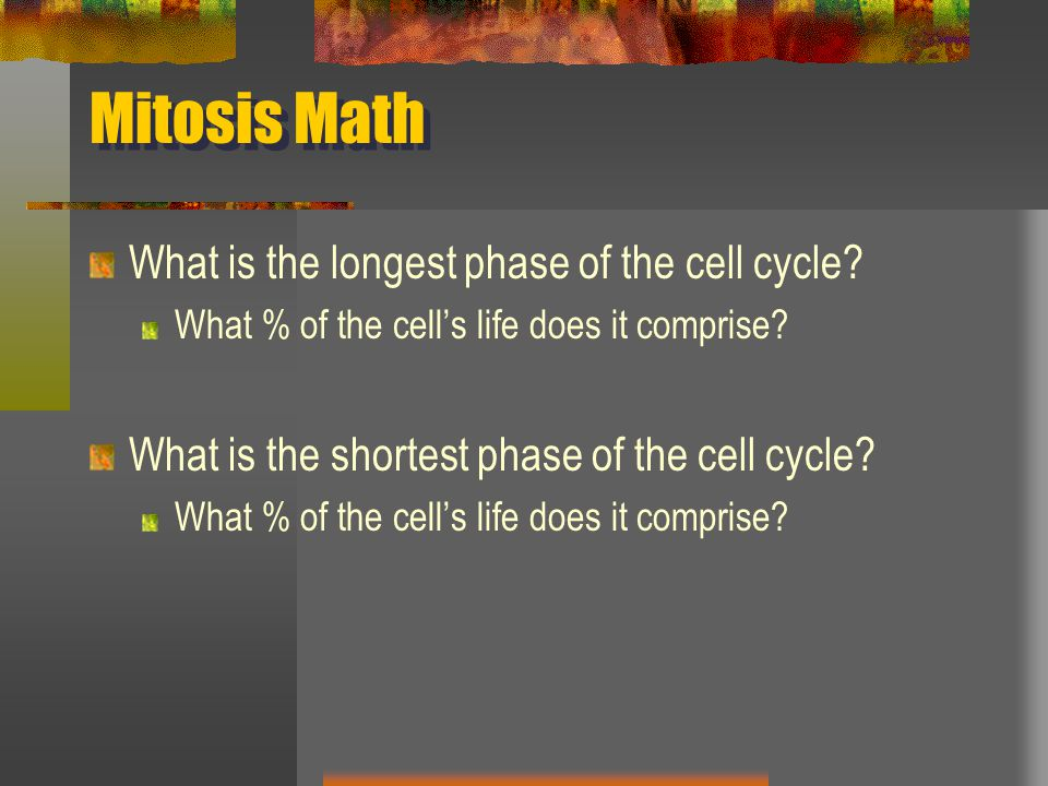 Mitosis Math What is the longest phase of the cell cycle