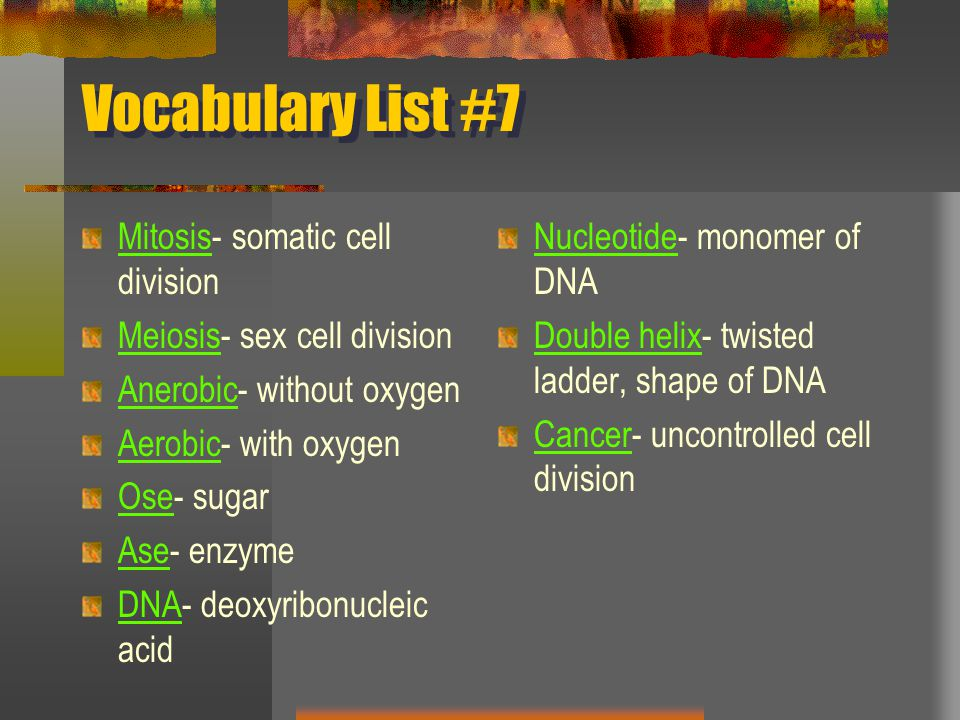 Vocabulary List #7 Mitosis- somatic cell division