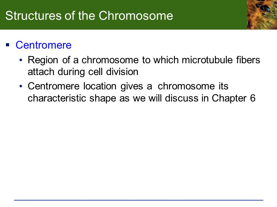 Structures of the Chromosome