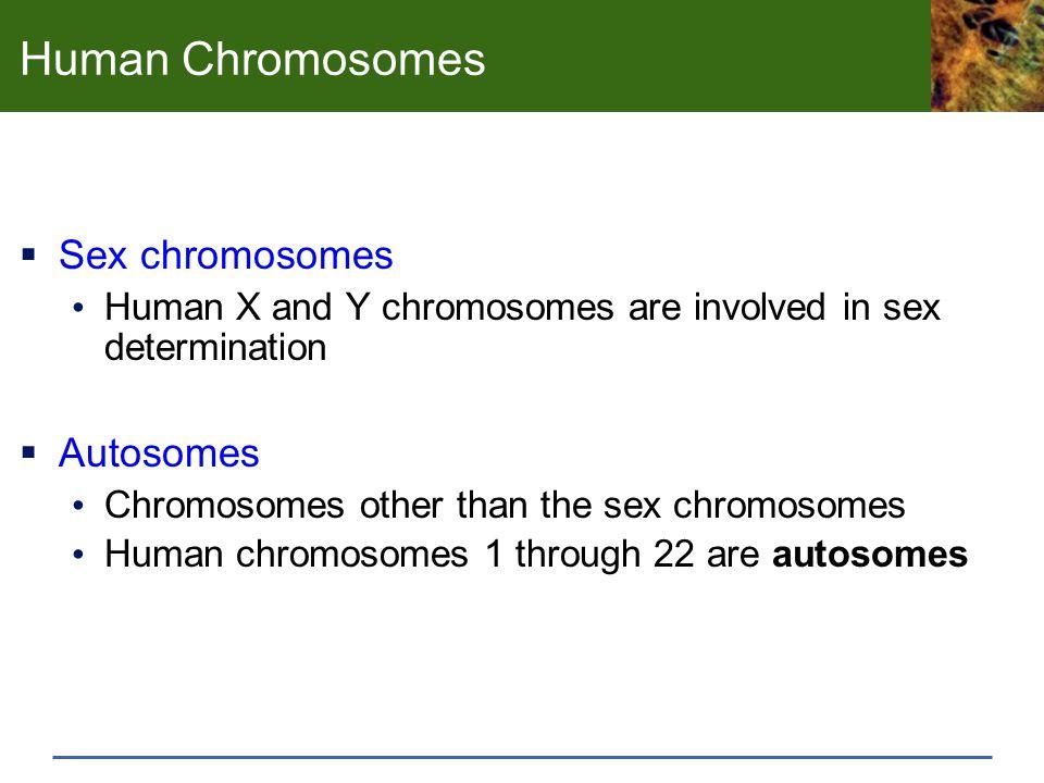 Human Chromosomes Sex chromosomes Autosomes