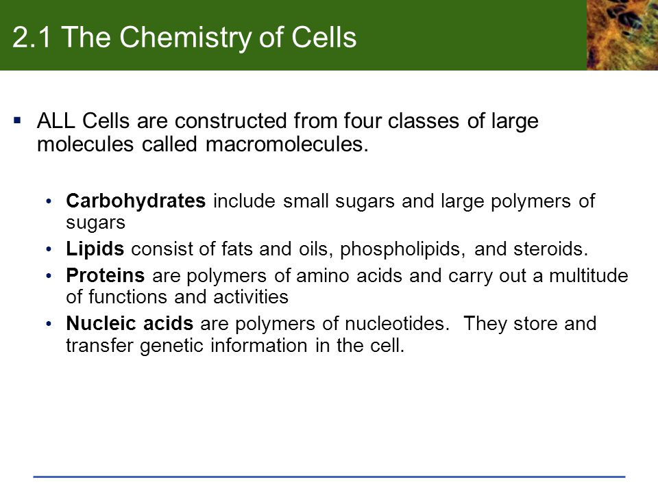 2.1 The Chemistry of Cells ALL Cells are constructed from four classes of large molecules called macromolecules.