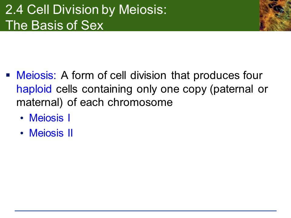 2.4 Cell Division by Meiosis: The Basis of Sex