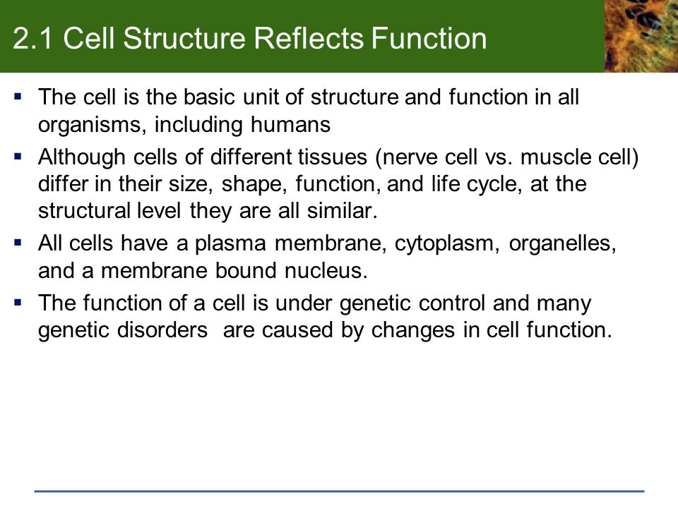 2.1 Cell Structure Reflects Function