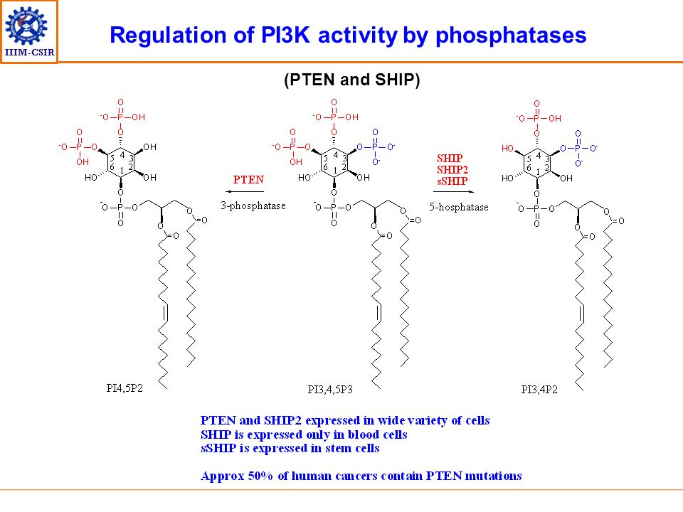 Regulation of PI3K activity by phosphatases