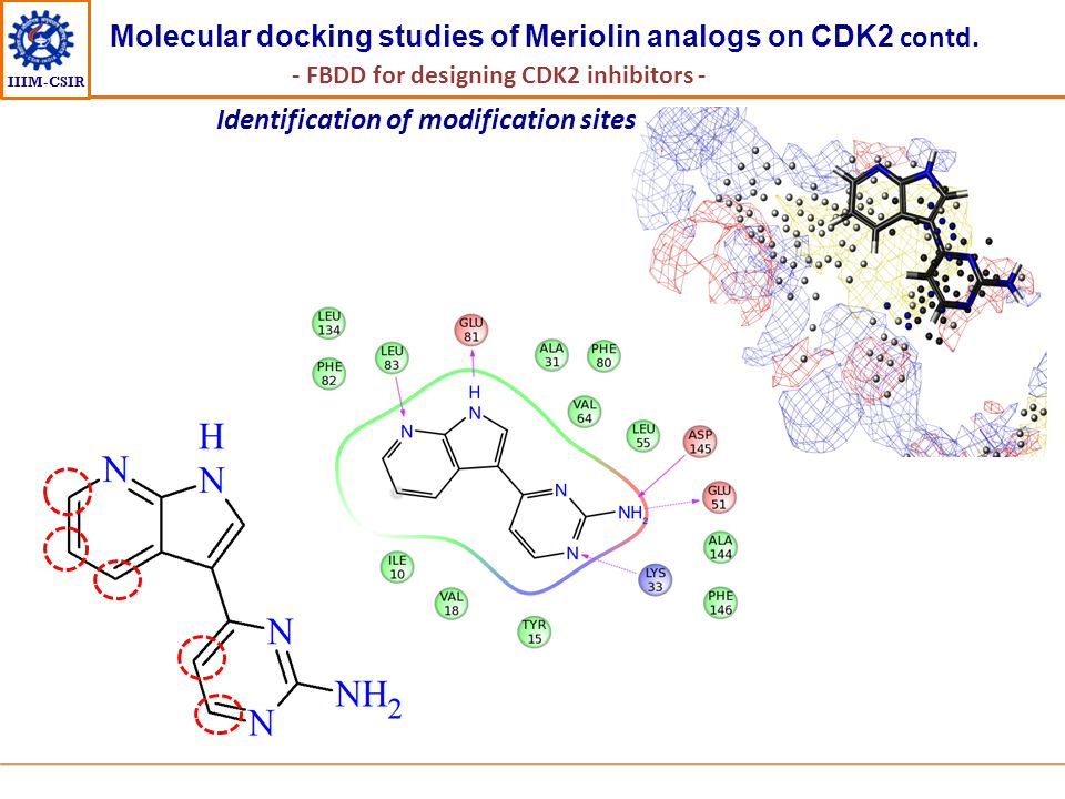 Molecular docking studies of Meriolin analogs on CDK2 contd.